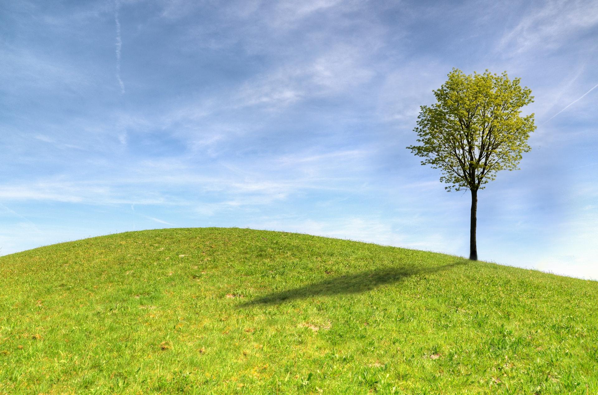 soort bomen